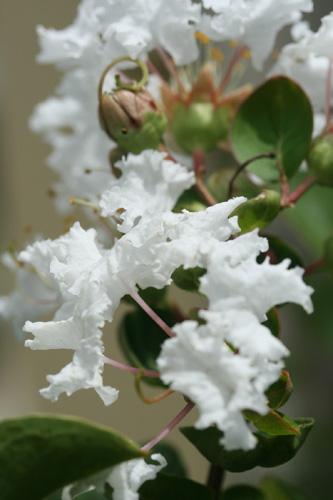 flores-040.jpg