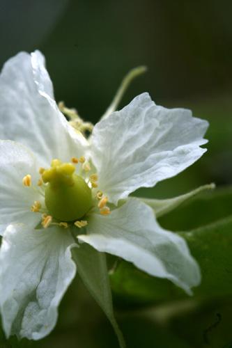flores-056.jpg