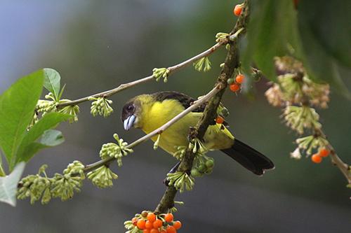 colibri 066.jpg