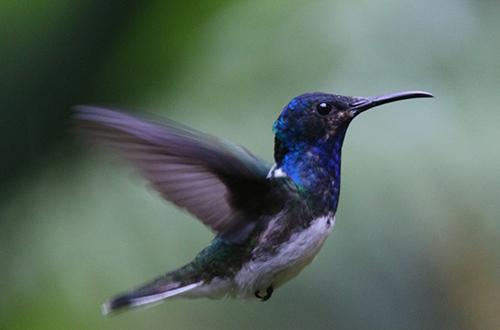 colibri 161.jpg
