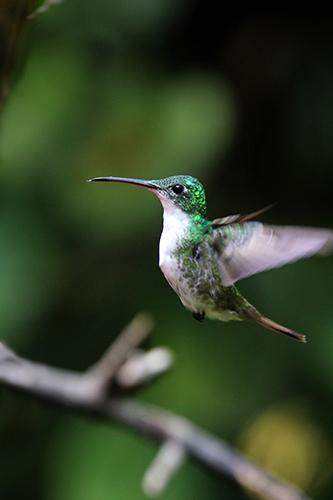 colibri 242.jpg