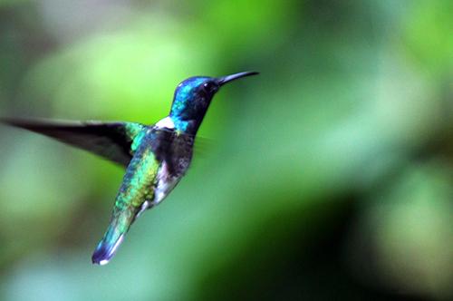 colibri 249.jpg